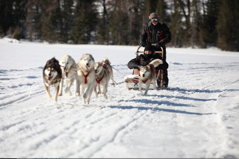 DOG SLED EXPEDITION IN NORTH CANADA